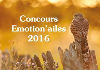 Les nominés Emotion'ailes 2016