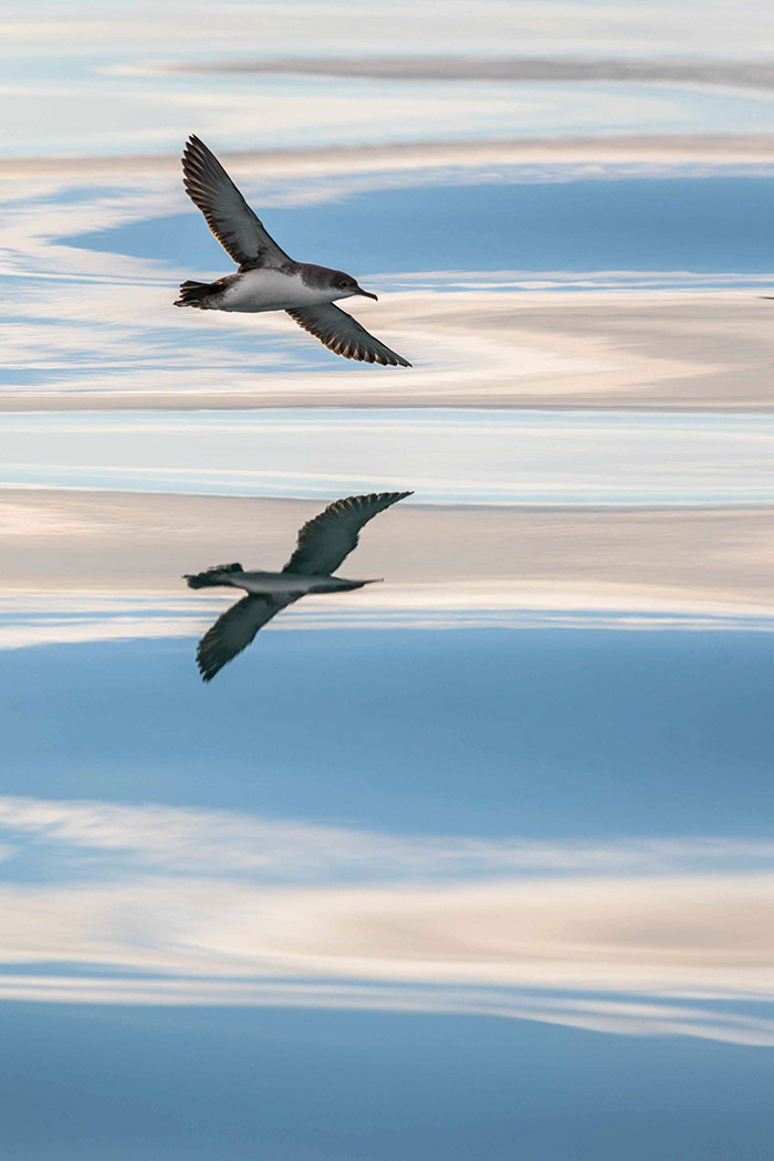oiseaux-2016_on_1_ROGATI-ALAIN-19661209_1