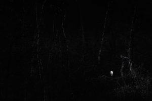 catégorie noir et blanc - VAN LAARHOVEN BAS