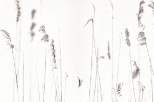 catégorie noir et blanc - CONFORTINI ELISA