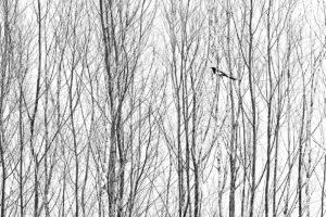 catégorie noir et blanc - MILO ANGELO RAMELLA