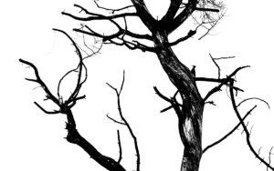 catégorie noir et blanc - VANDEPITTE SIMON