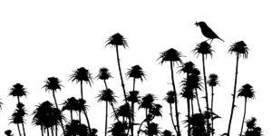 1er prix catégorie noir et blanc - DOMINGUEZ ANDRES MIGUEL