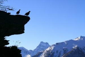 catégorie paysage animalier - ADAMO FLORENT