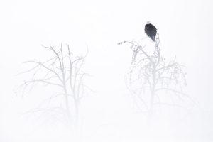 catégorie paysage animalier - D'OULTREMONT MICHEL