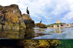 catégorie paysage animalier - XAVIER MAS FERRA