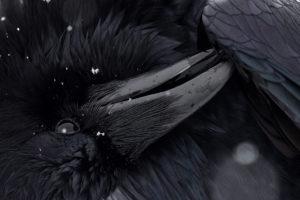 1er prix catégorie oiseaux dans tous ses états - D'OULTREMONT MICHEL