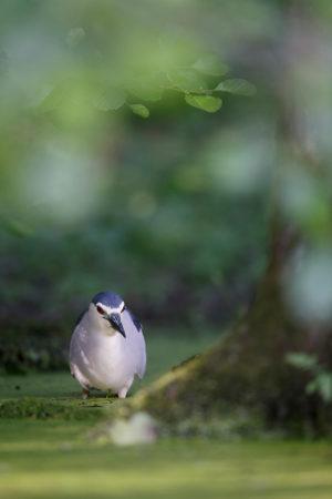 catégorie oiseaux dans tous ses états - MOUTRILLE JEROME