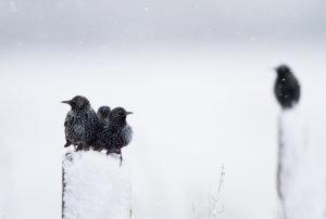 catégorie oiseaux dans tous ses états - PETRY RENAUD