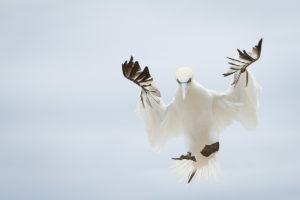 catégorie oiseaux dans tous ses états - DIERS CLAUDIE