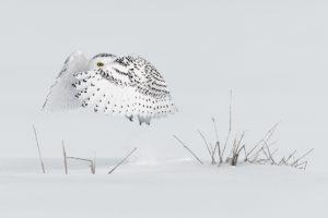 catégorie oiseaux dans tous ses états - MILO ANGELO RAMELLA
