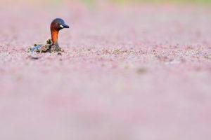 catégorie oiseaux dans tous ses états - JOAQUIN FIGUEREDO GONZALEZ