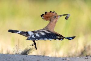 catégorie oiseaux dans tous ses états - HINSCHE THOMAS