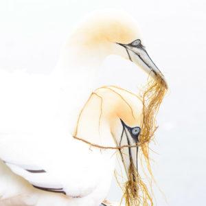 catégorie oiseaux dans tous ses états - ZWESERIJN JODY