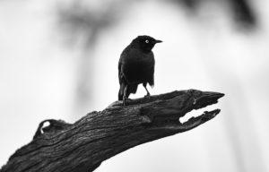catégorie noir et blanc - LORENT AUDREY
