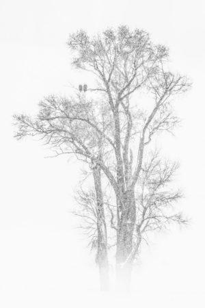 catégorie noir et blanc - CHANTEAU NATHALIE