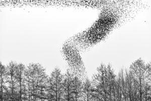 catégorie noir et blanc - BEAVERS LOULOU