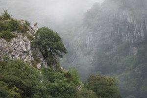 catégorie paysage animalier - DELLICOUR MARTIN