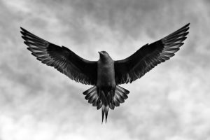 catégorie oiseau dans tous ses états - HREBICEK JIRI