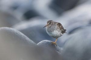 catégorie oiseau dans tous ses états - SAHLI CHRISTOPHE