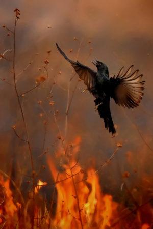 catégorie oiseau dans tous ses états - MUKHERJEE KALLOL