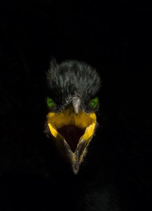 catégorie oiseau dans tous ses états - PELTOMAKI JARI